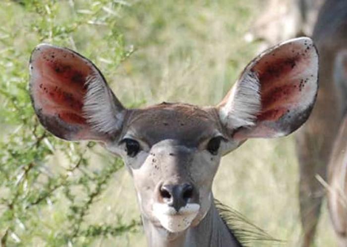 Antelope Park