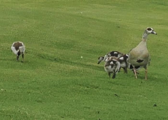 Kimberley Golf Club