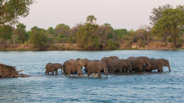 Elephants Shongololo Express